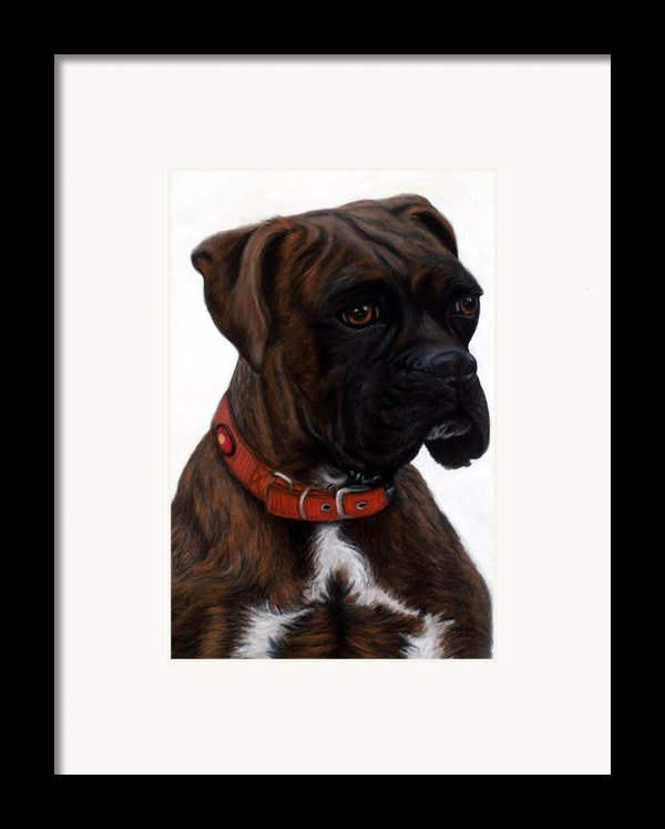 Brindle Boxer Framed Print By Michelle Harrington
