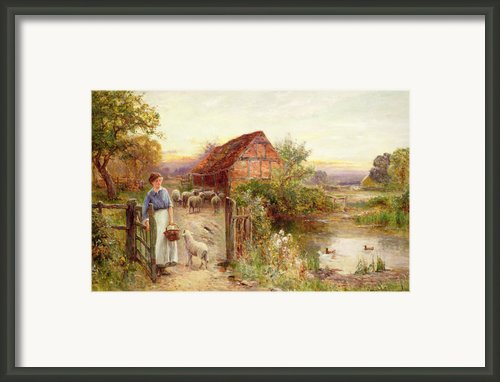 Bringing Home The Sheep Framed Print By Ernest Walbourn