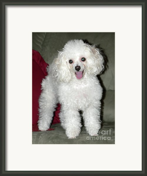 Brodie Framed Print By Joy Tudor