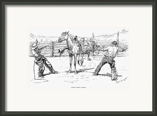 Bronco Busters Saddling Framed Print By Granger