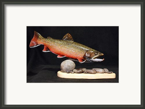 Brook Trout 14 Inch Framed Print By Eric Knowlton