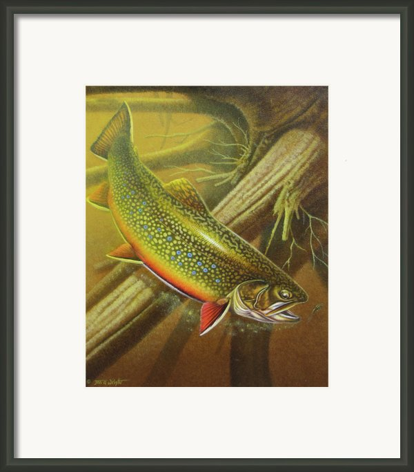 Brook Trout Cover Framed Print By Jq Licensing