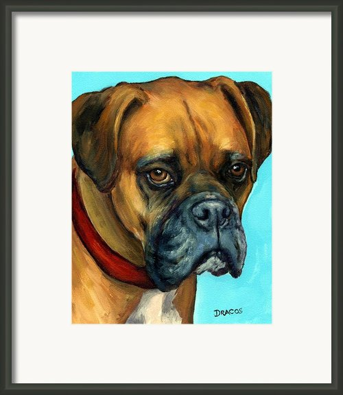Brown Boxer On Turquoise Framed Print By Dottie Dracos