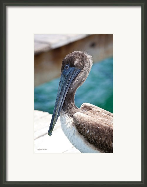 Brown Pelican Friend Framed Print By Michelle Wiarda