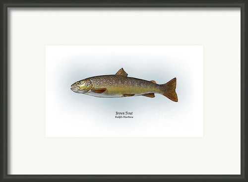 Brown Trout Framed Print By Ralph Martens