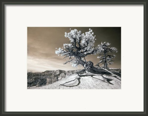 Bryce Canyon Tree Sculpture Framed Print By Mike Irwin