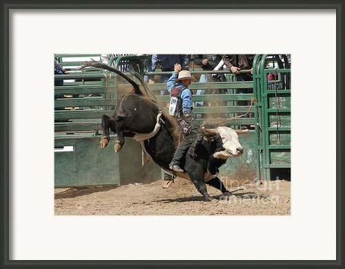 Bucking Bulls 101 Framed Print By Cheryl Poland