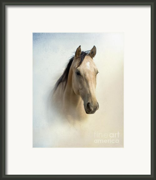 Buckskin Beauty Framed Print By Betty Larue