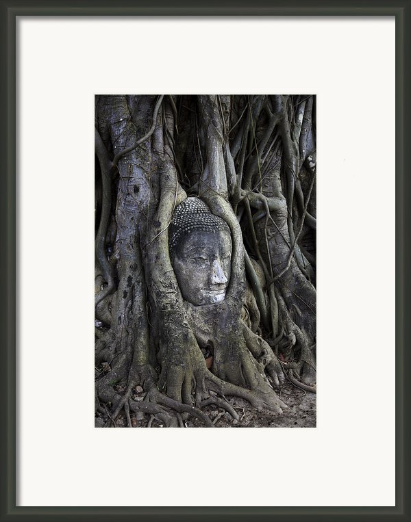 Buddha Head In Tree Framed Print By Adrian Evans
