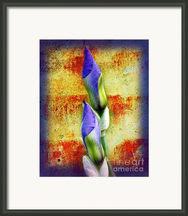 Buddies Framed Print By Andee Photography