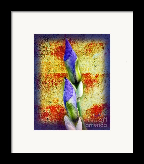 Buddies Framed Print By Andee Design