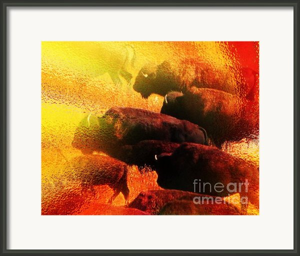 Buffalo Sun Framed Print By Terril Heilman