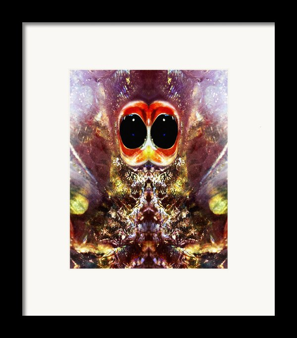 Bug Eyes Framed Print By Skip Nall