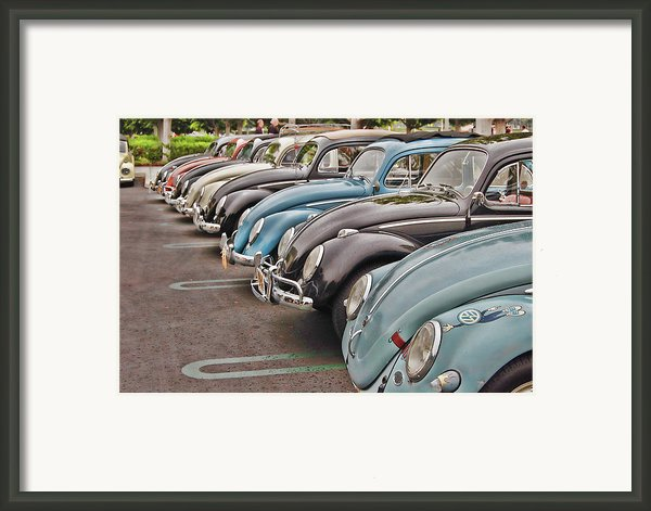 Bugs Framed Print By Bill Dutting