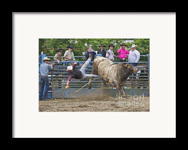 Bull 1 - Rider 0 Framed Print By Sean Griffin