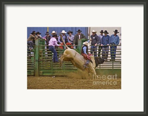 Bull Rider 2 Framed Print By Sean Griffin