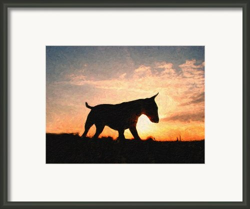 Bull Terrier At Sunset Framed Print By Michael Tompsett