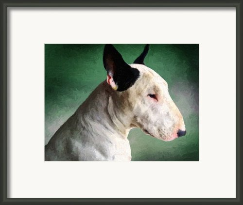 Bull Terrier On Green Framed Print By Michael Tompsett