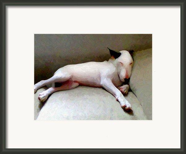 Bull Terrier Sleeping Framed Print By Michael Tompsett