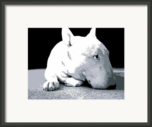 Bull Terrier White On Black Framed Print By Michael Tompsett