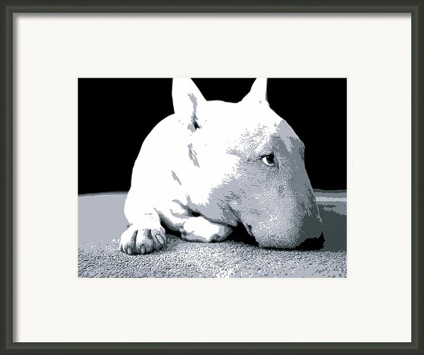 Bull Terrier White On Black Framed Print By Michael Tompsett