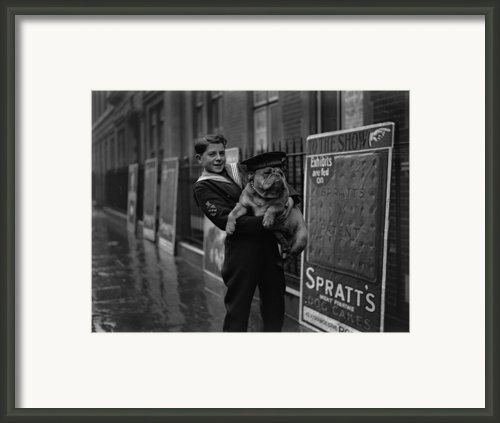 Bulldog Beauty Framed Print By London Express