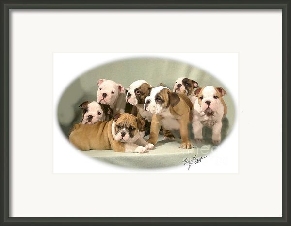 Bulldog Family Pups Framed Print By Maxine Bochnia