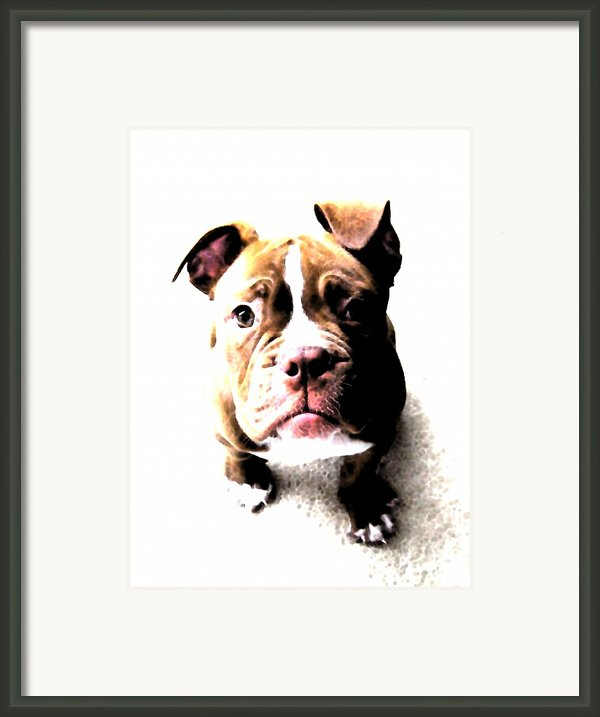 Bulldog Puppy Framed Print By Michael Tompsett