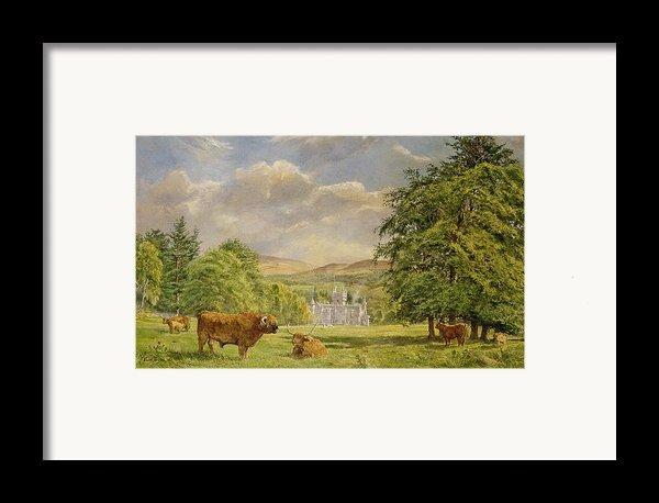 Bulls At Balmoral Framed Print By Tim Scott Bolton