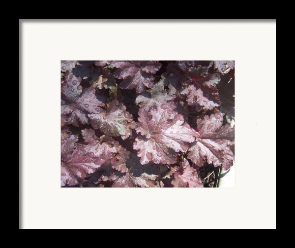 Burgandy Leaves After The Rain Framed Print By Anna Villarreal Garbis