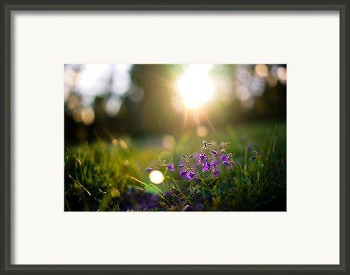 Burst Framed Print By Justin  Hill