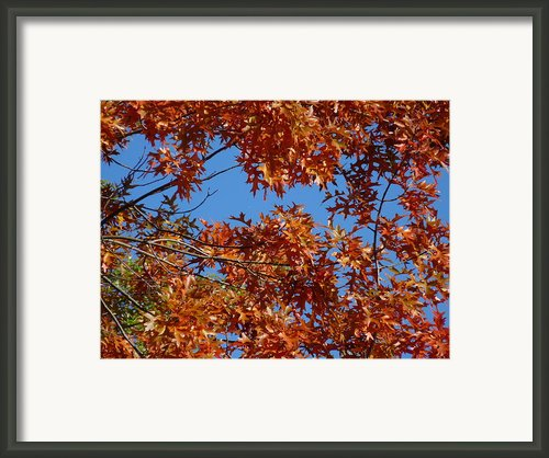 Burst Of Fall Framed Print By Lynette Mcnees