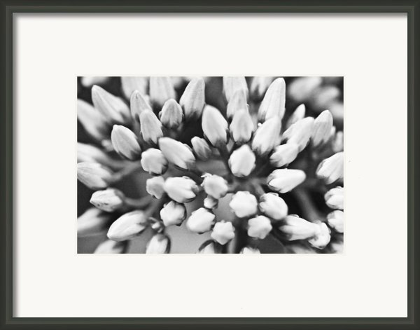 Burst Framed Print By Ryan Kelly