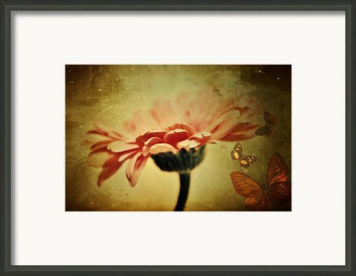 Butterflies Framed Print By Cathie Tyler