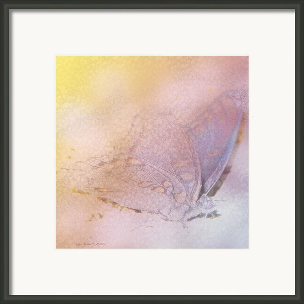 Butterfly Abstract Framed Print By Joseph G Holland