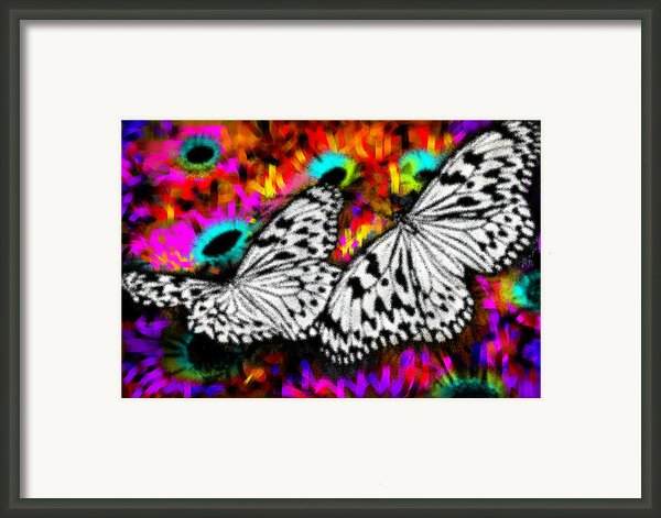 Butterfly Framed Print By Ilias Athanasopoulos