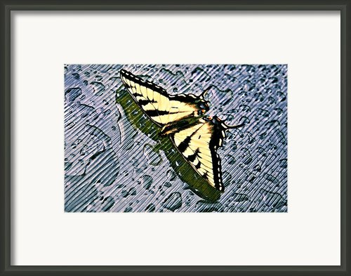 Butterfly In Rain Framed Print By Susan Leggett