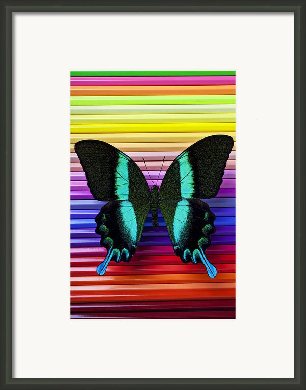 Butterfly On Colored Pencils Framed Print By Garry Gay