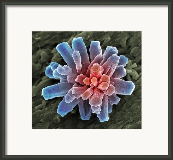 Calcium Phosphate Crystal, Sem Framed Print By Steve Gschmeissner