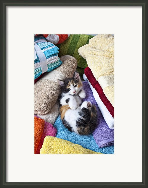 Calico Kitten On Towels Framed Print By Garry Gay