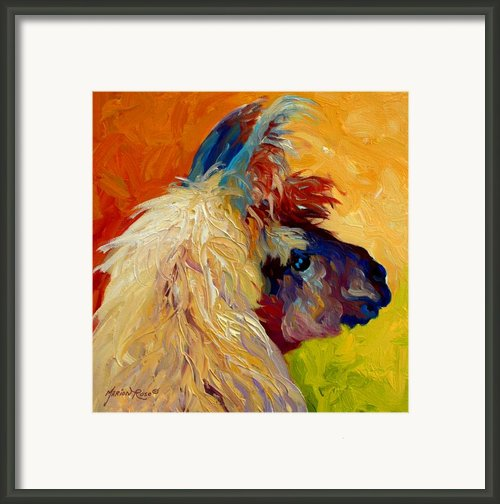 Calico Llama Framed Print By Marion Rose