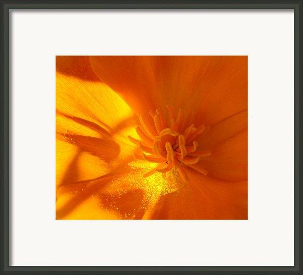 California Poppy Framed Print By Liz Vernand