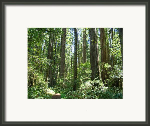 California Redwood Trees Forest Art Prints Framed Print By Baslee Troutman Photography Prints