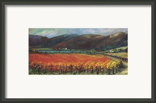 Calistoga Vineyard In Napa Valley By Deirdre Shibano Framed Print By Deirdre Shibano