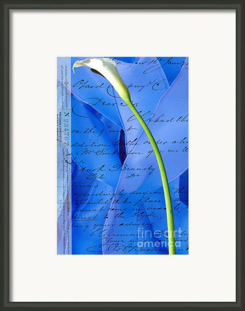 Calla Lilly On Blue Ribbon Love Letter Framed Print By Anahi Decanio