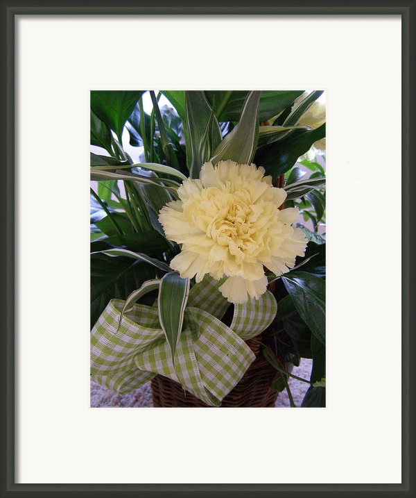 Calming Greens Framed Print By Sandi Floyd