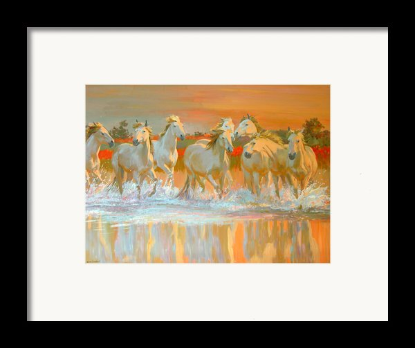 Camargue  Framed Print By William Ireland