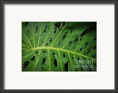 Camouflaged Framed Print By Luke Moore