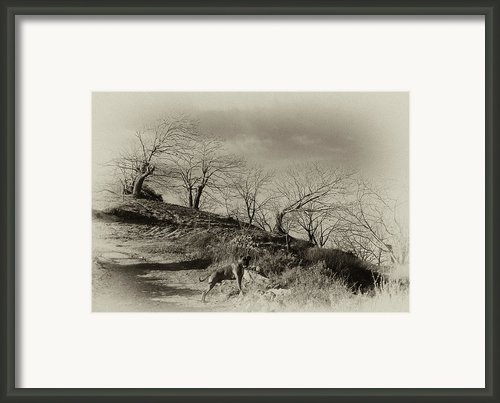 Campo Dog Framed Print By Kenton Smith