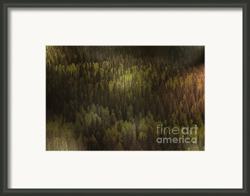Canadian Forest - The Woods Are Lovely Dark And Deep Framed Print By Christine Till